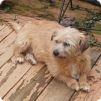 Adopt A Pet :: Ella - Lexington, KY