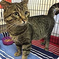 Adopt A Pet :: Zoolander - Oakland, CA