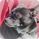 Adopt A Pet :: Court