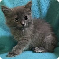 Adopt A Pet :: Beverly - Nashville, TN
