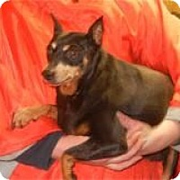 Adopt A Pet :: Mabel ADOPTED!! - Antioch, IL