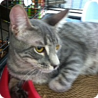 Adopt A Pet :: Kasey - La Canada Flintridge, CA