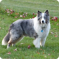 Adopt A Pet :: Harley (Adopted) - Pittsburgh, PA