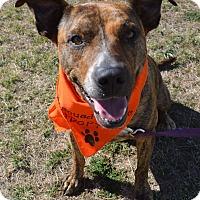 Adopt A Pet :: Nina - Aurora, CO