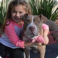 Adopt A Pet :: Truffles - Redondo Beach, CA