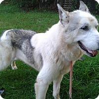 Adopt A Pet :: Princess: unique piebald - Augusta County, VA