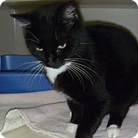 Adopt A Pet :: Lily - Hamburg, NY