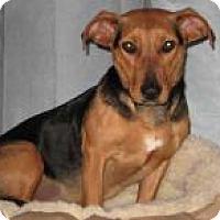Adopt A Pet :: Sydney - Marlton, NJ