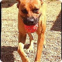 Adopt A Pet :: Inga - Bastrop, TX