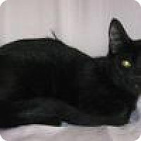 Adopt A Pet :: Xavier - Powell, OH
