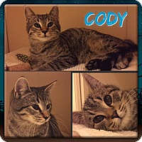 Adopt A Pet :: Cody - Jeffersonville, IN