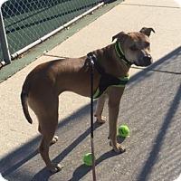 Adopt A Pet :: Leonard - Baton Rouge, LA