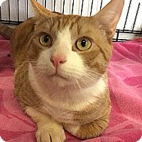 Adopt A Pet :: Raoul - Oakland, CA