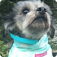 Adopt A Pet :: Miracle - Bridgewater, NJ