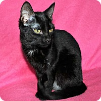 Adopt A Pet :: Clarabelle - Mackinaw, IL