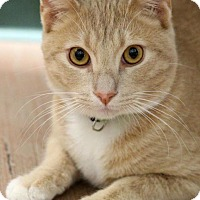 Adopt A Pet :: Miguel - Scituate, MA
