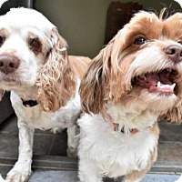 Adopt A Pet :: Spanky & Lillie - Fayette, MO
