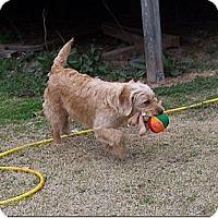Adopt A Pet :: R.I. PENNY - W. Warwick, RI