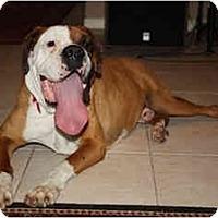 Adopt A Pet :: Beef - Tallahassee, FL