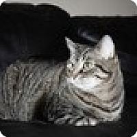 Adopt A Pet :: Molly - Vancouver, BC
