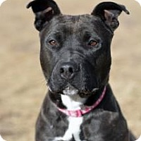 Adopt A Pet :: Sue - Cheyenne, WY