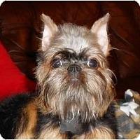 Adopt A Pet :: CASSANDRA - ADOPTION PENDING - Little Rock, AR