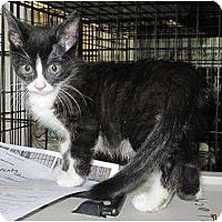 Adopt A Pet :: Chloe - Catasauqua, PA
