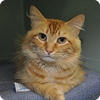 Adopt A Pet :: Cheddar - Rockaway, NJ