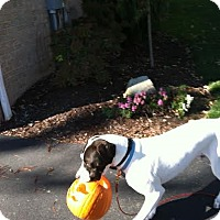 Adopt A Pet :: Charlie (the other one) - Baden, PA