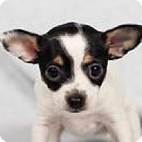 Adopt A Pet :: Hero - Minneapolis, MN