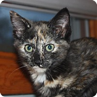 Adopt A Pet :: Rhoda (LE) - Little Falls, NJ