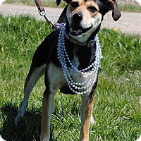 Adopt A Pet :: Patty - East Sparta, OH