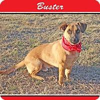Adopt A Pet :: Buster - Hillsboro, TX