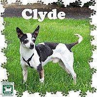 Adopt A Pet :: Clyde - Fallston, MD
