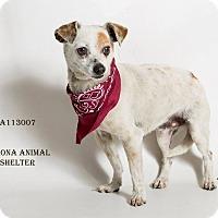 Adopt A Pet :: KENNEL 41 - Corona, CA
