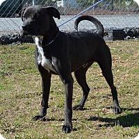 Adopt A Pet :: Salem - Allentown, NJ