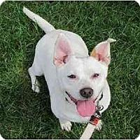 Adopt A Pet :: KASHI - Cleveland, OH