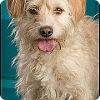 Adopt A Pet :: MiMi - Owensboro, KY