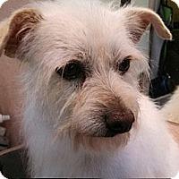 Adopt A Pet :: Bandit - Seattle, WA