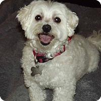 Adopt A Pet :: Trina - Phoenix, AZ