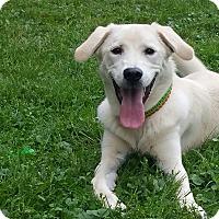 Adopt A Pet :: Spot - Caledon, ON