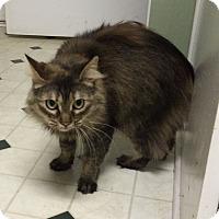 Adopt A Pet :: Bama - Monroe, GA