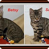 Domestic Shorthair Cat for adoption in Marietta, Ohio - Betsy & Sammy