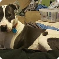 Adopt A Pet :: Russ - Media, PA