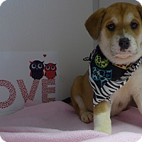 Adopt A Pet :: Hope - Manning, SC