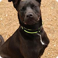 Adopt A Pet :: Chance - O Fallon, IL