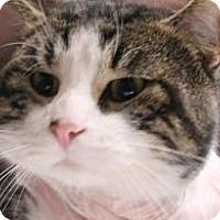 Adopt A Pet :: Houdini - Daytona Beach, FL