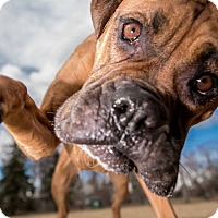 Adopt A Pet :: Elsa - Denver, CO