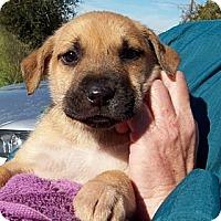 Adopt A Pet :: ELLIE - Glastonbury, CT
