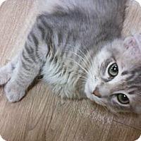 Adopt A Pet :: Sterling - Bunnell, FL